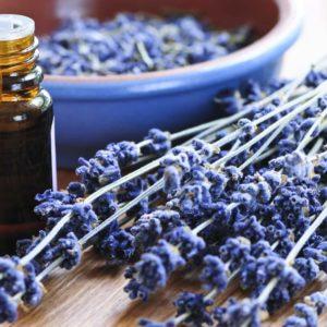 Lavender Essential Oils For Aromatherapy Massage At Le Petit Sanctuary, Taunton